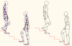 人物モデル化(成人男性階段上り下り) MPZ