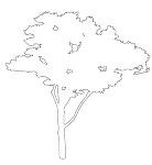 樹木立面図の2