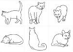 猫 PART-1