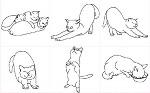 猫 PART-2